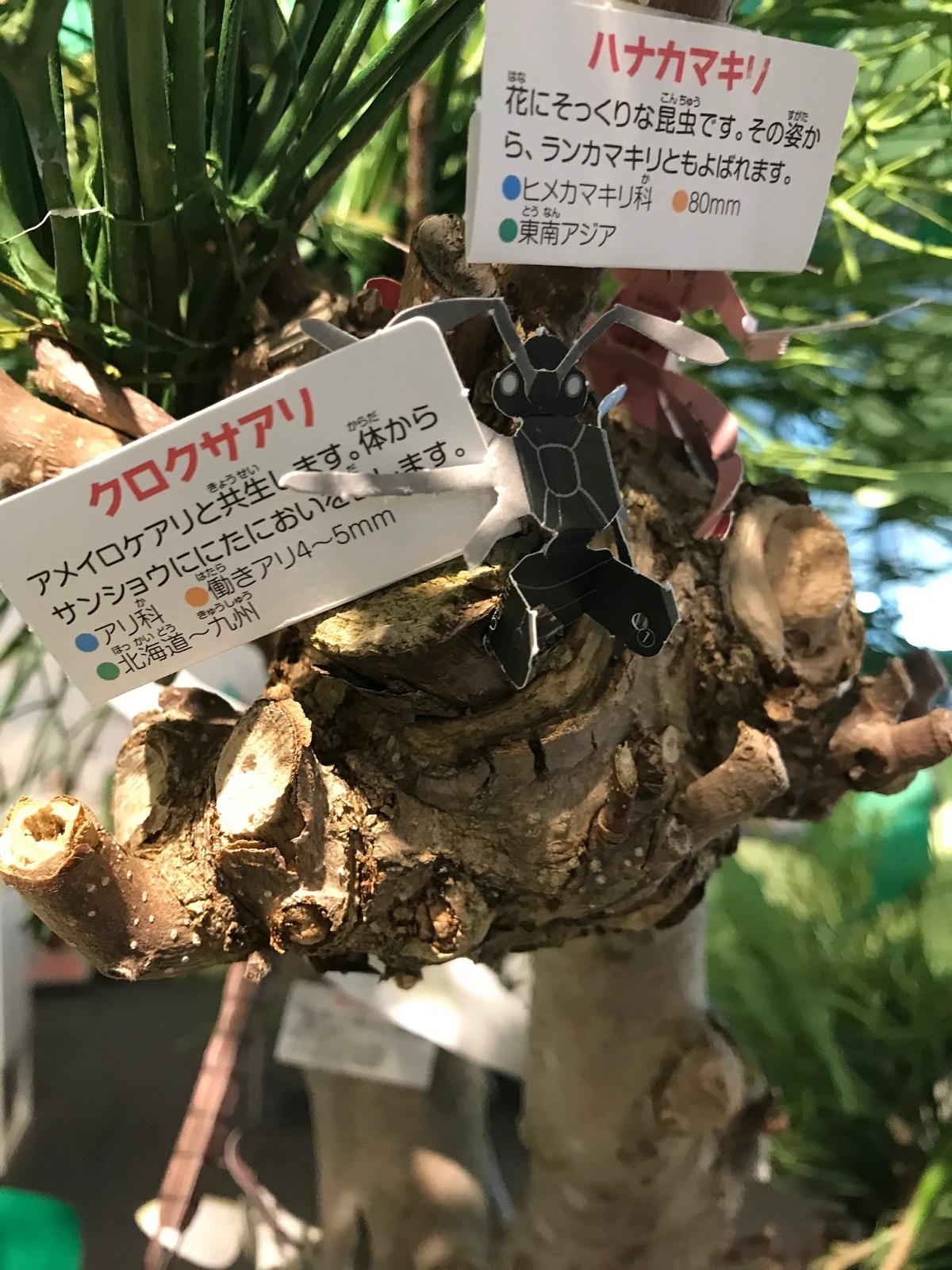 http://blog.iwate-eco.jp/2018/07/22/IMG_2415.jpg